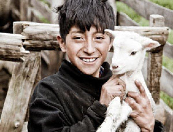 画像1: 生活にとても役立つヤギ1頭 (1)